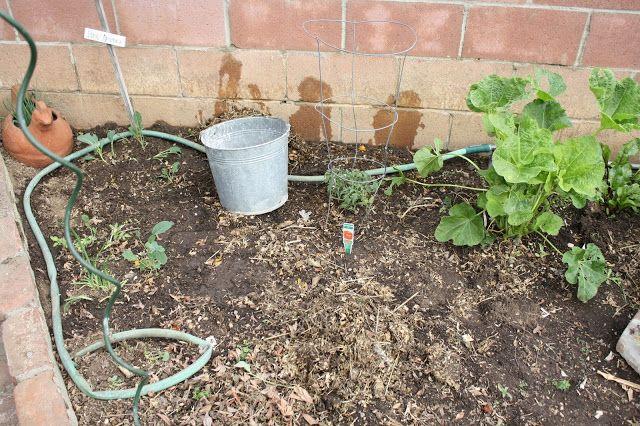 use an old garden hose for drip irrigation | Easy garden, Indoor ...
