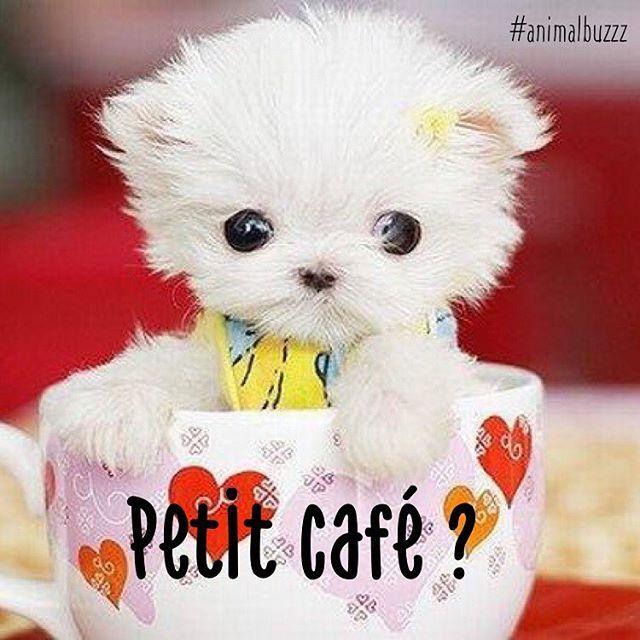 #petitcafe pour démarrer le #weekend ??? #animalbuzzz