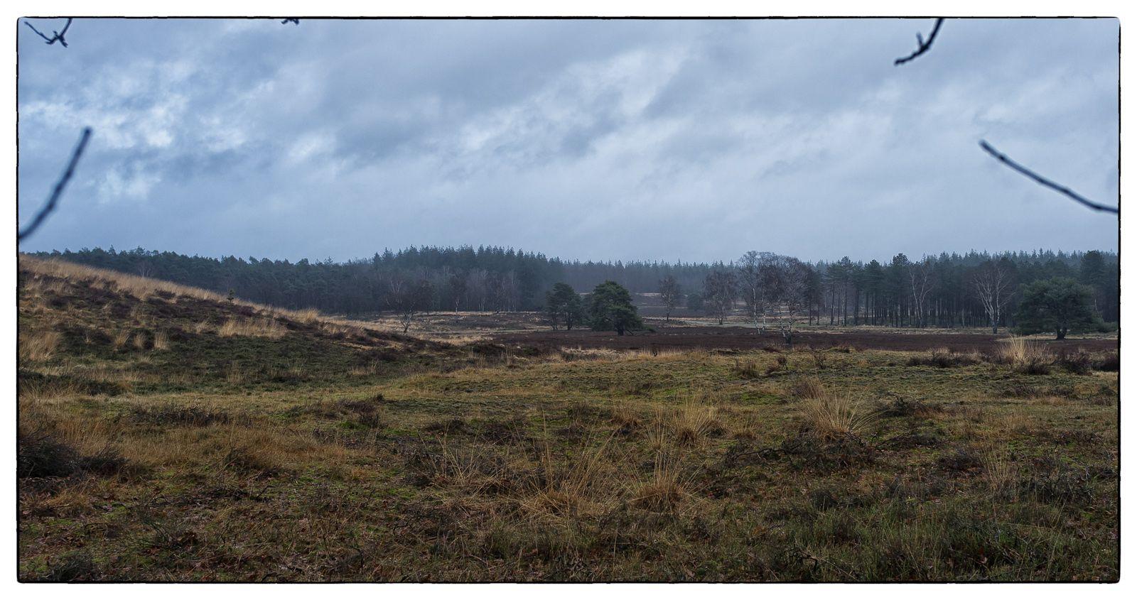 Loenermark nabij Loenen Eerbeek