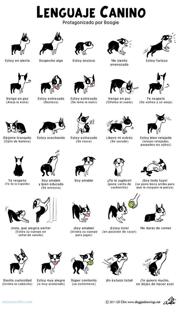 Señales de los perros