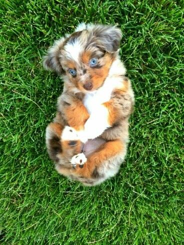 Pin By Jumbo Mumbo On Dogs With Images Cute Animals Cute Dogs