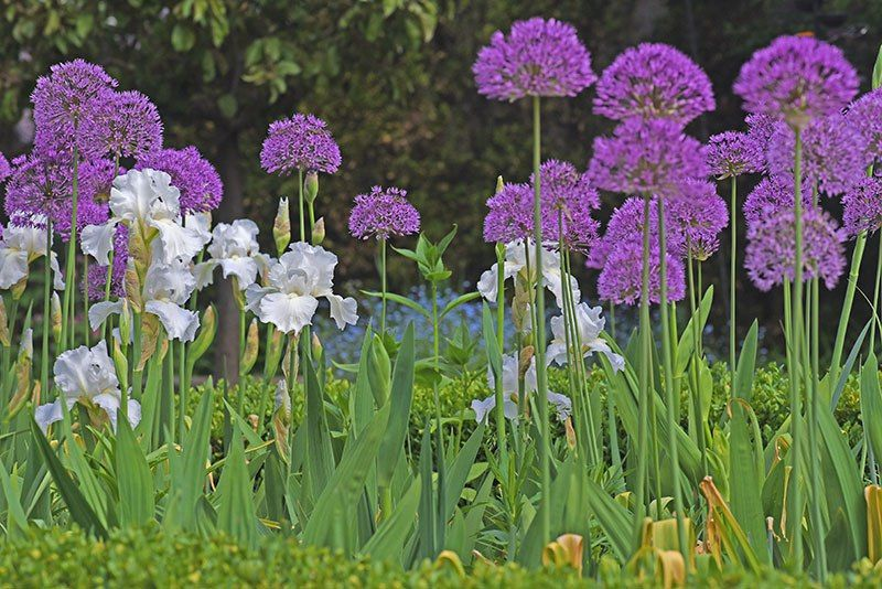 All of May Garden 2016   Garden Walk Garden Talk