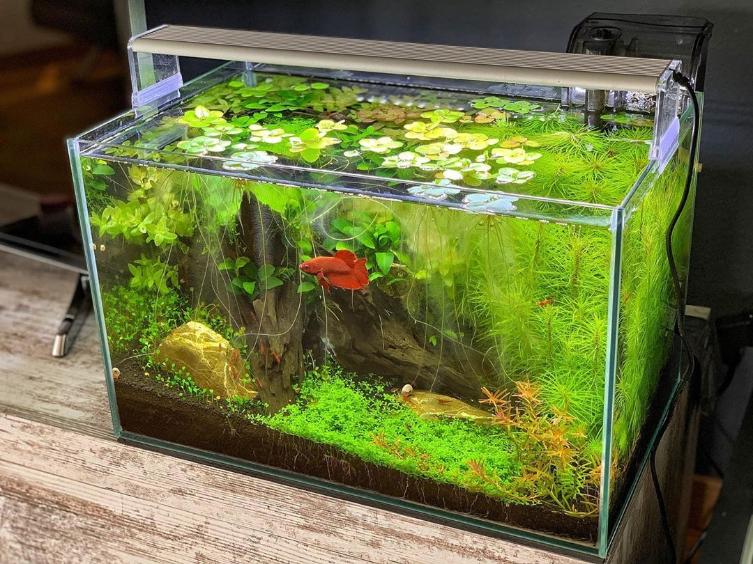 Is Your Tank Looking Dull Well We Ve Got You Covered Come In And Take A Look At Our Massive Selection Of Light With Images Marine Fish Aquarium Service Planted Aquarium