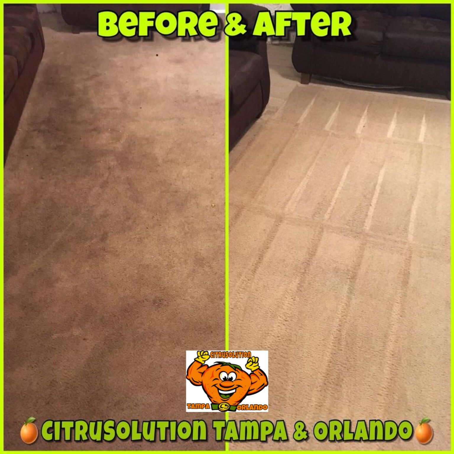 Citrusolution Carpet Upholstery