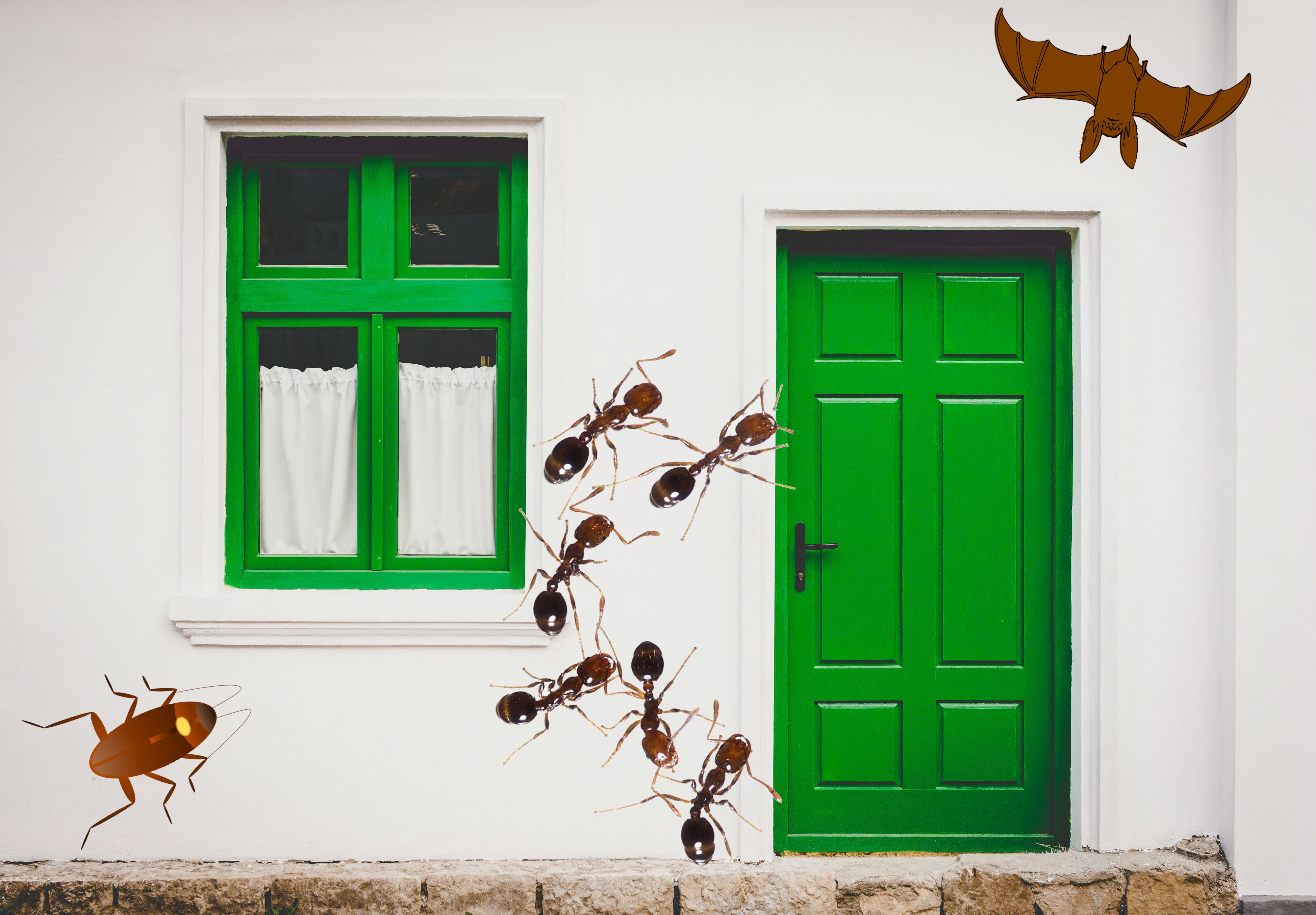 How Do Pests Find Their Way Into Your Home Home Tall Cabinet Storage Home Decor