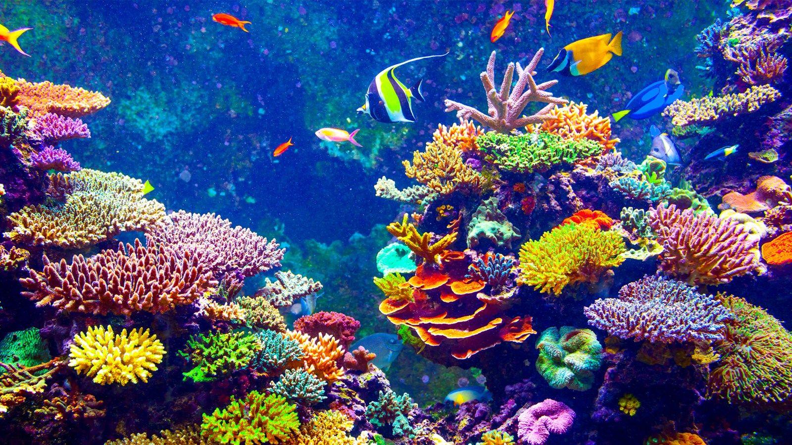 Pin On Marine Life