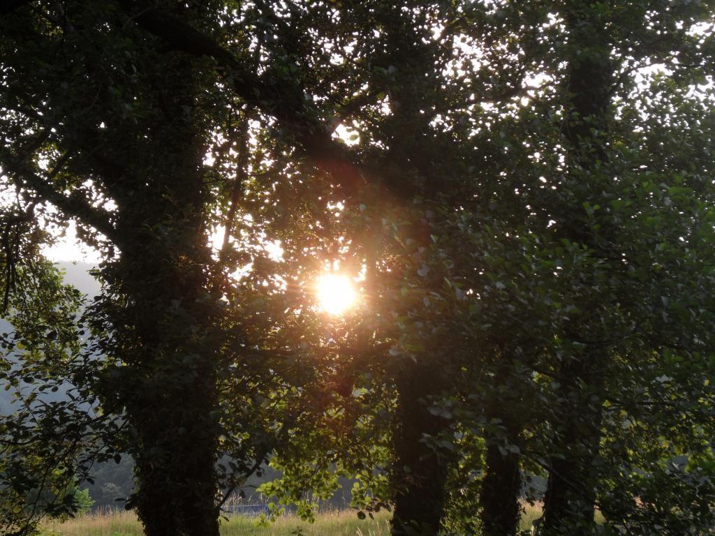 Sunset thro the trees.#NantCelyn #TalesOfGlynHud #CaitlinswishStories