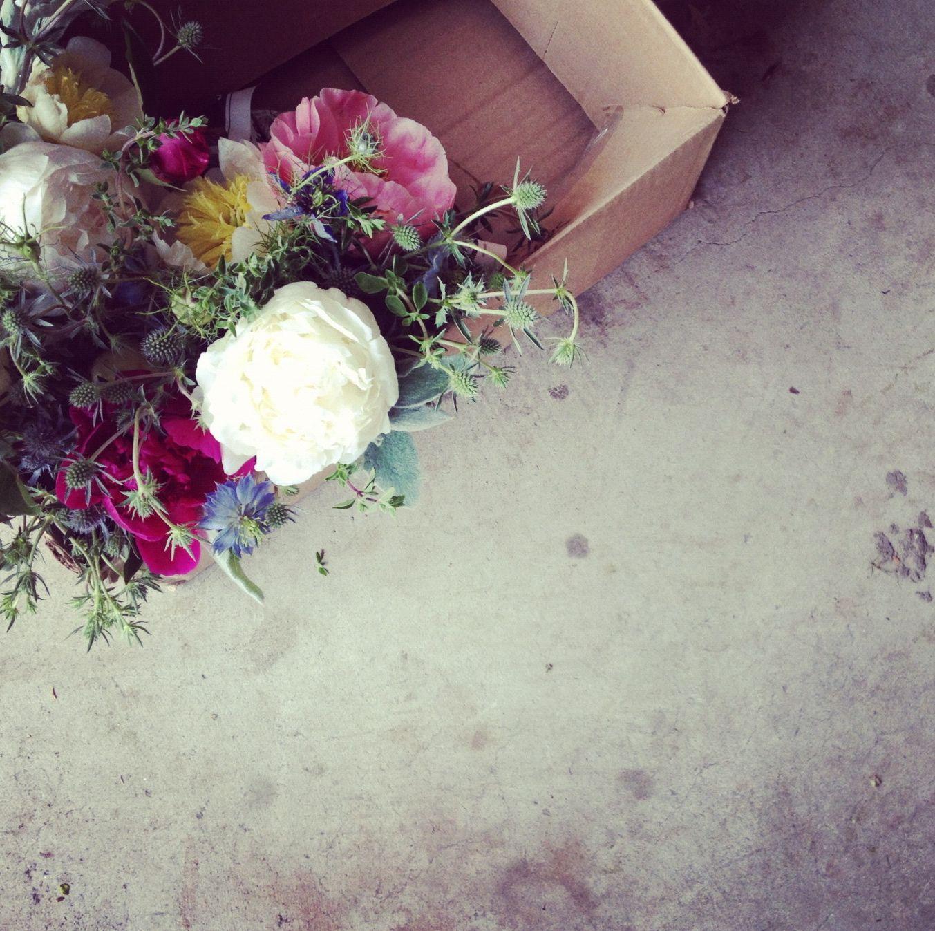 foxfodderfarm - Galleries - Flowers and Such