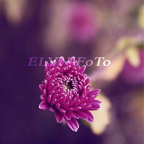 ELYN-FoTo / Lila 2