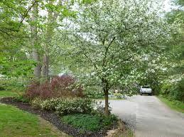 """Résultat de recherche d'images pour """"landscaping Parking"""""""