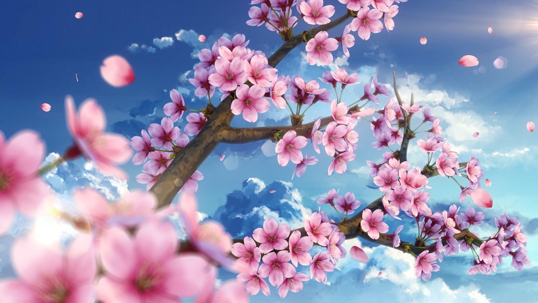 Anime Wallpaper 2000x1126 Cherry Blossoms Clouds Flowers Nobody Original Petals Sky Cherry Blossom Wallpaper Anime Cherry Blossom Cherry Blossom Painting