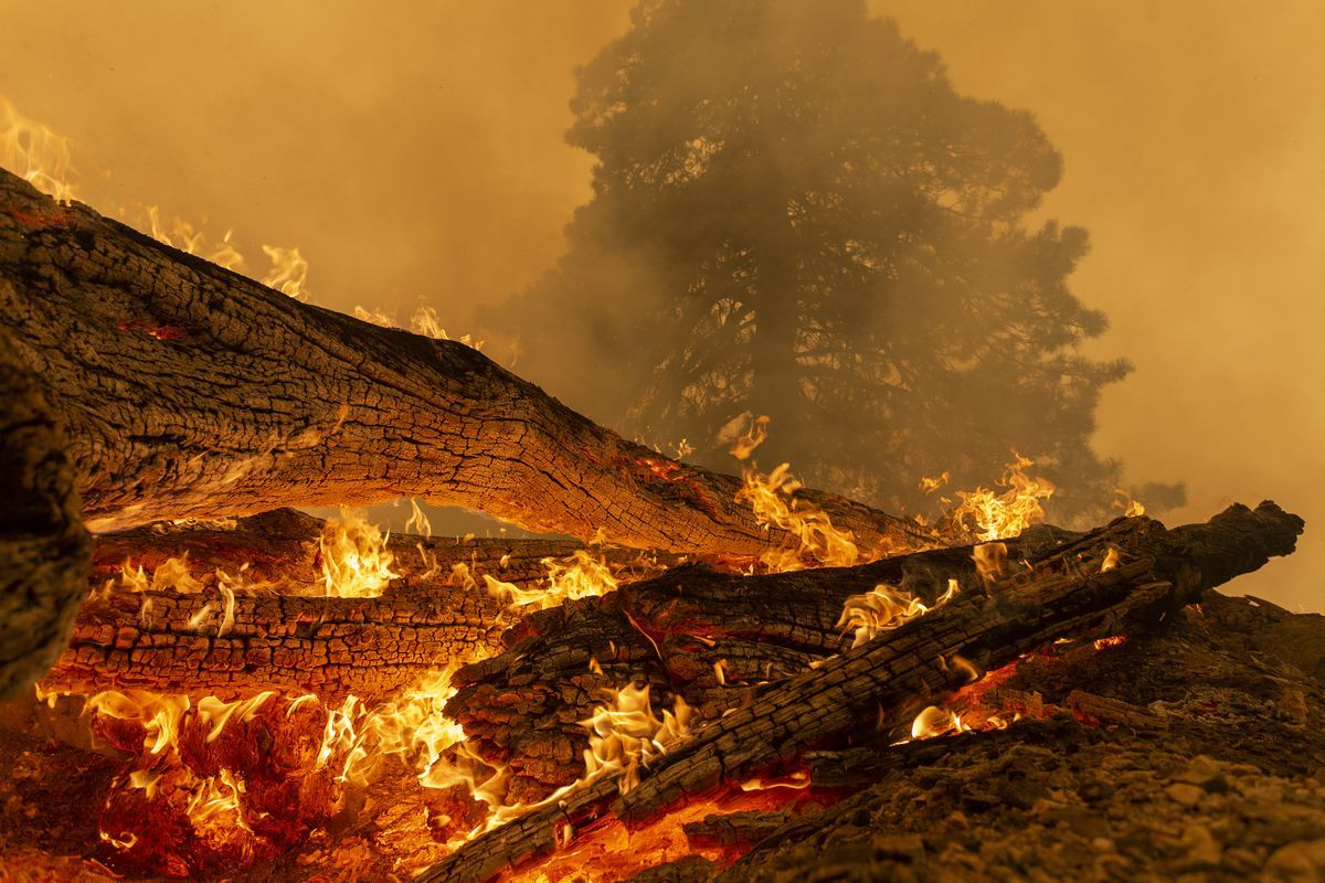 The Bobcat Fire Burns In The Angeles National Forest New York Daily News In 2020 Mendocino National Forest Bay Bridge San Francisco California Wildfires