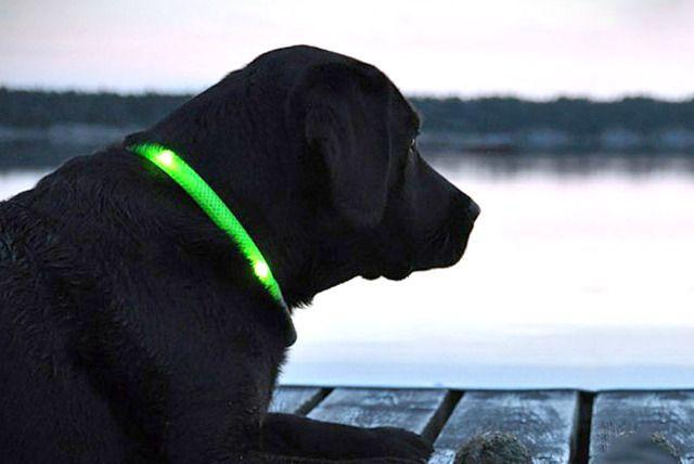 Good Idea For Minnie Kaz Pet Collars Pets Dogs Puppies