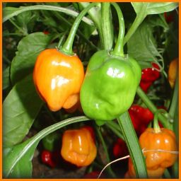 Seed Starting 101: Growing Peppers from Seed