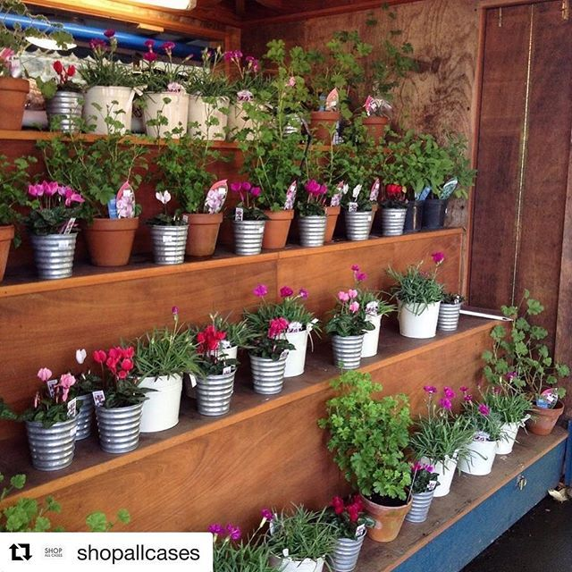 Plants Plants Plants Whats your favourite flower? Get your