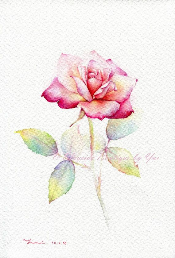 Print Rose Watercolor Painting 7 5 X 11 Dessin Rose Comment