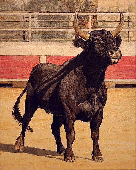Another toro de camargue they still parade the bulls - Dessin de toro ...