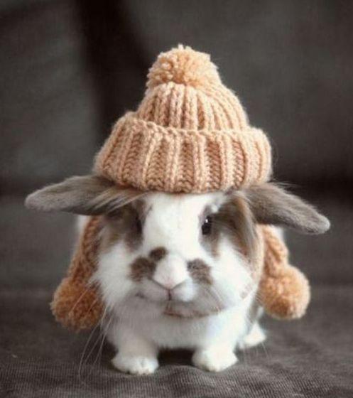 lief konijntje