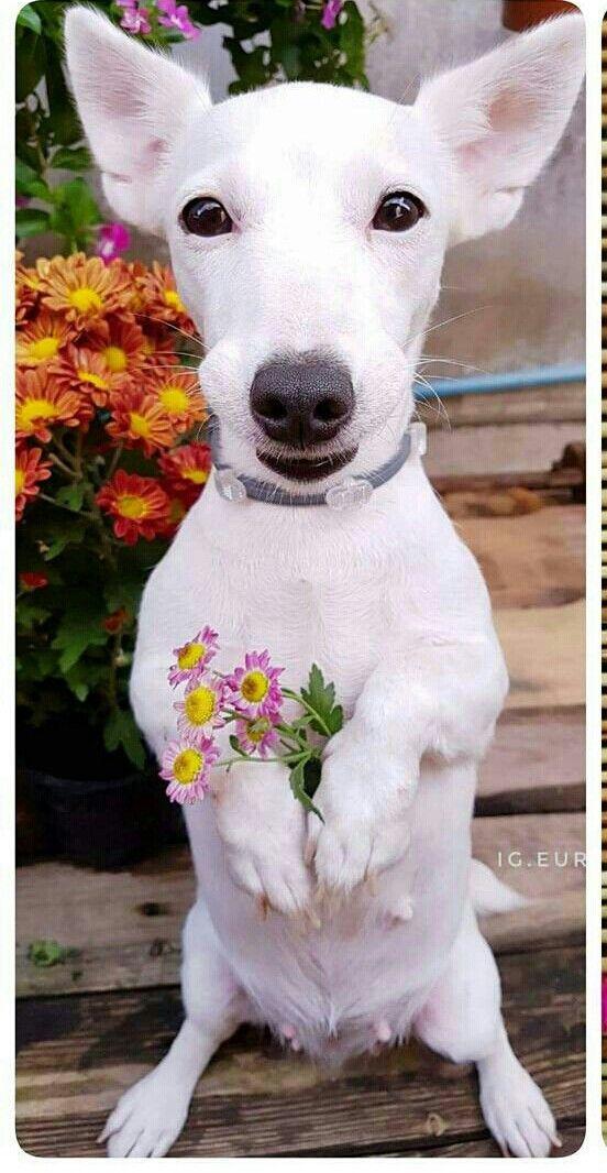 ola senhor bob oque o tras aqui eu troxe essas flores para vc senhorita burlye muito obrigada senhor bob venha mais tarde no cafe agora naum posso conversar