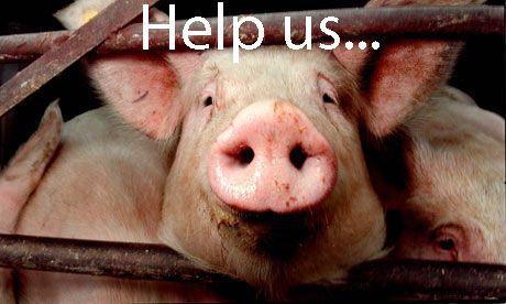They need help, it's not up to them, it's up to us!