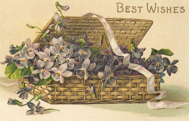 Basket of violets, with ribbon.