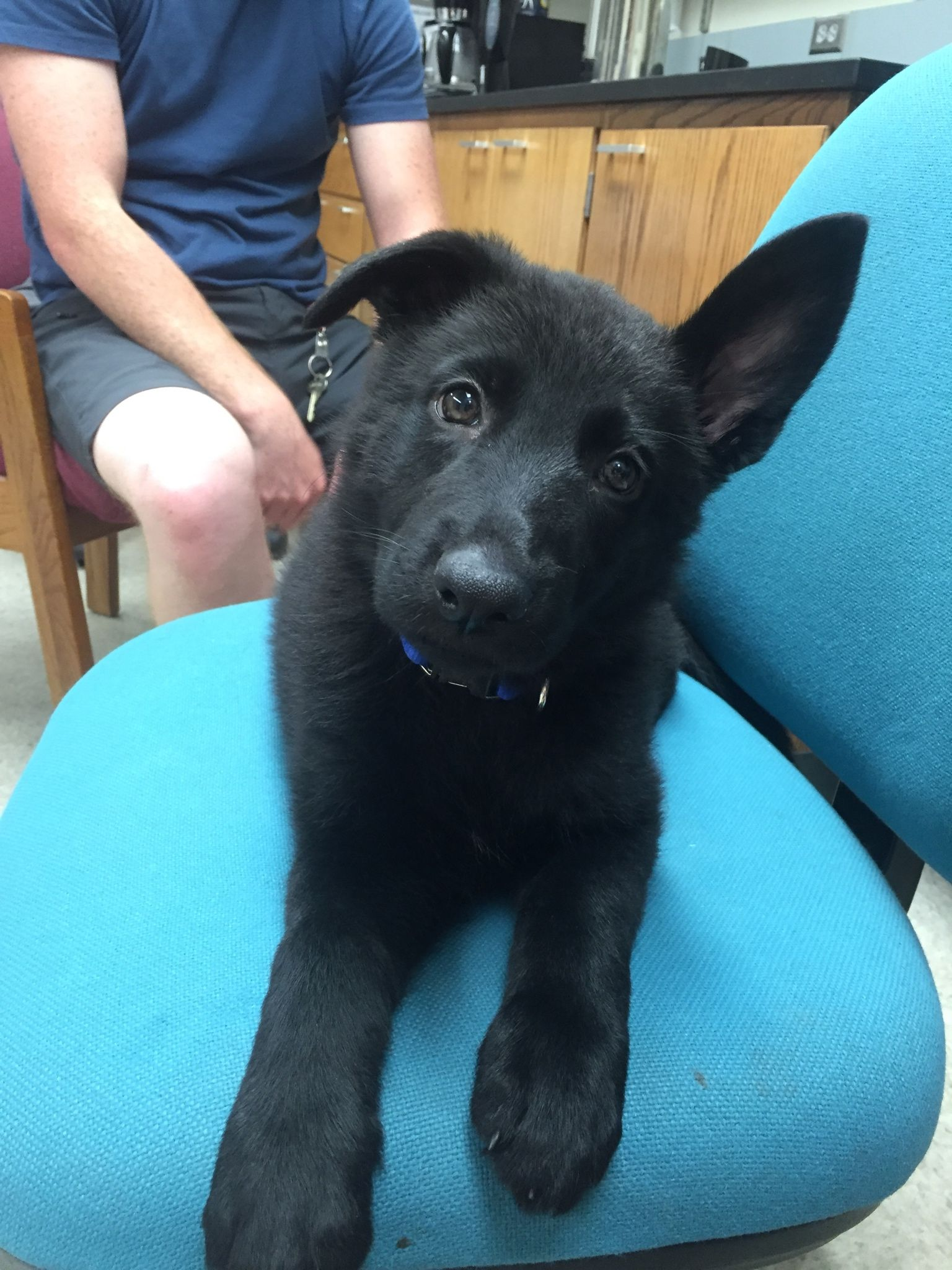 All Black German Shepherd Puppy German Shepherd Puppies German