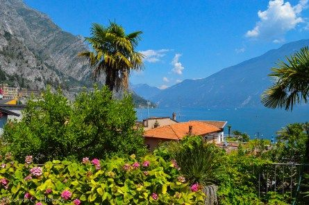 Palms in Limone