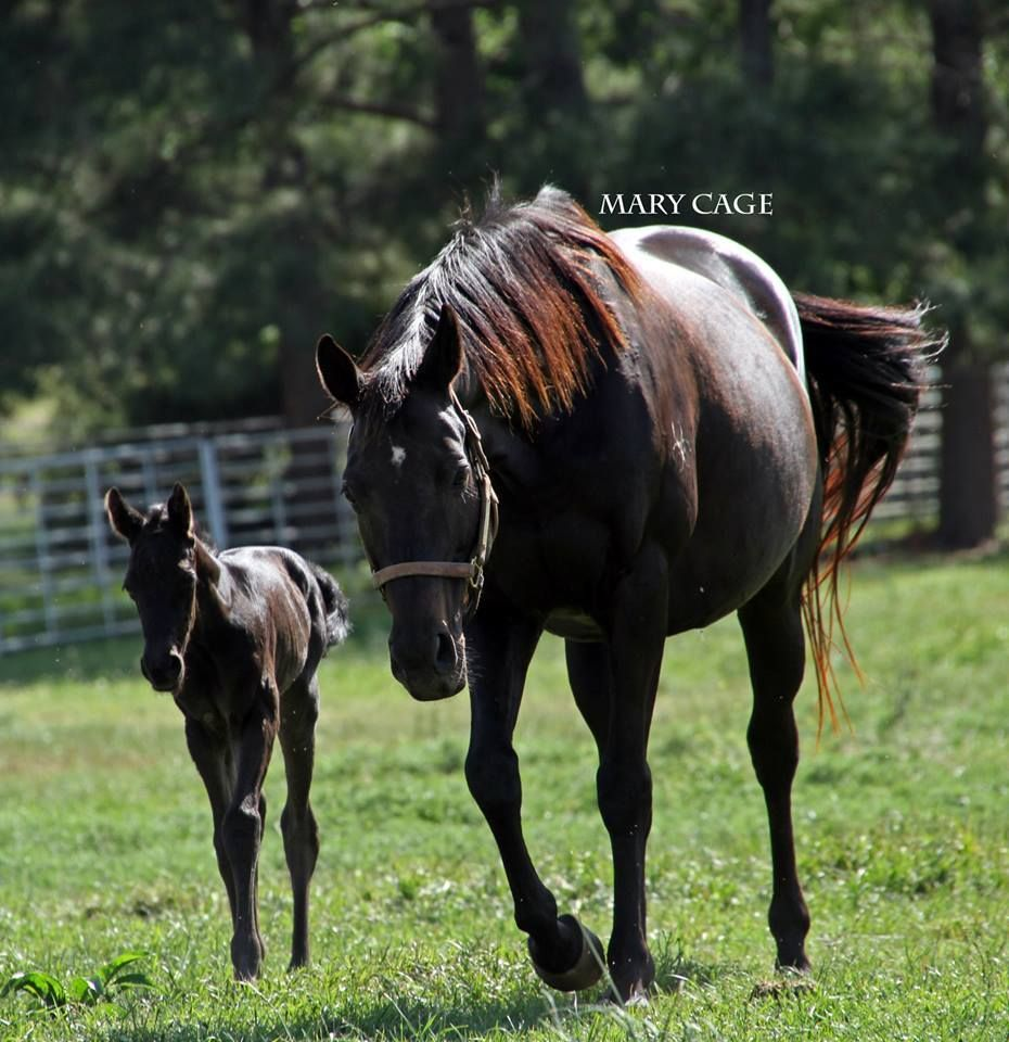 Saved from kill buyer, mare drops mystery foal.