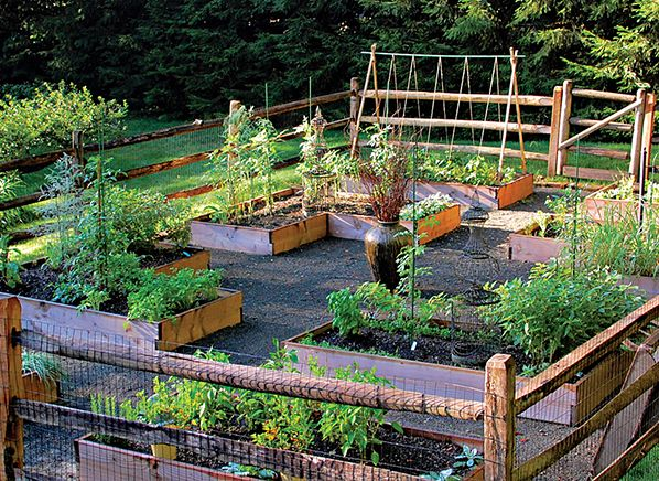 yard to table gardens - Google Search