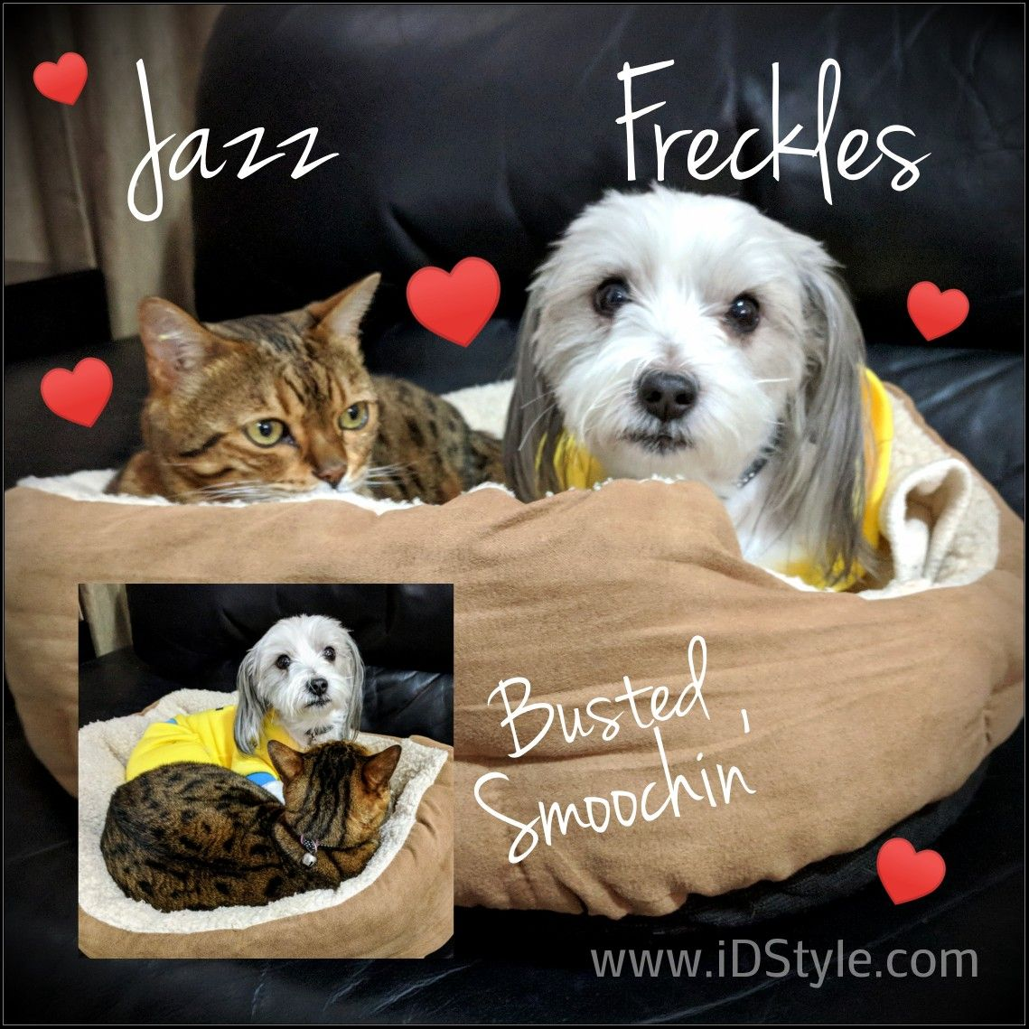 Jazz and Freckles busted smooching... Freckles, Busted