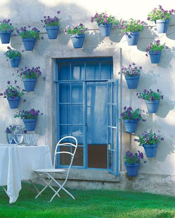 Pretty blue pots all over a white exterior wall. And purple petunias too!