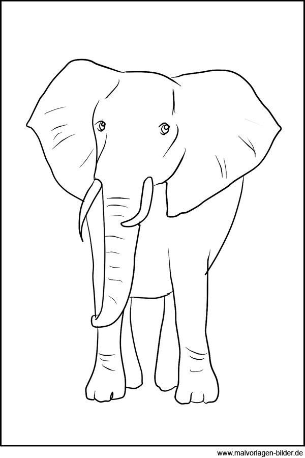 malvorlagen elefant ausmalbild elefanten bilder