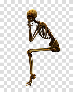 E S Bones I Yellow Sitting Skeleton Illustration Transparent Background Png Clipart Human Skeleton Human Skeleton Bones Skeleton Drawings