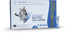 Control Fleas On Cats Prevent Heartworms In Cats Revolution Cat Fleas Cat Fleas Treatment Benadryl For Cats