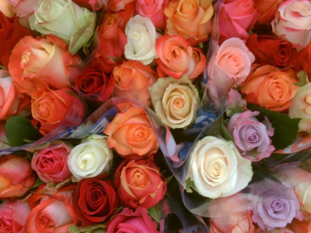Ivan De Silvestre On Twitter Flowers Plants Rose