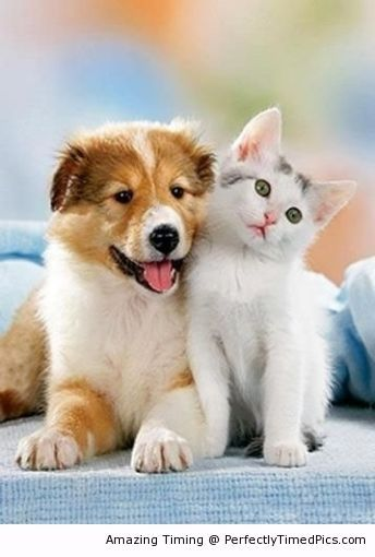 Forever Best Friends The Kitten And Puppy Can Be Best Friends