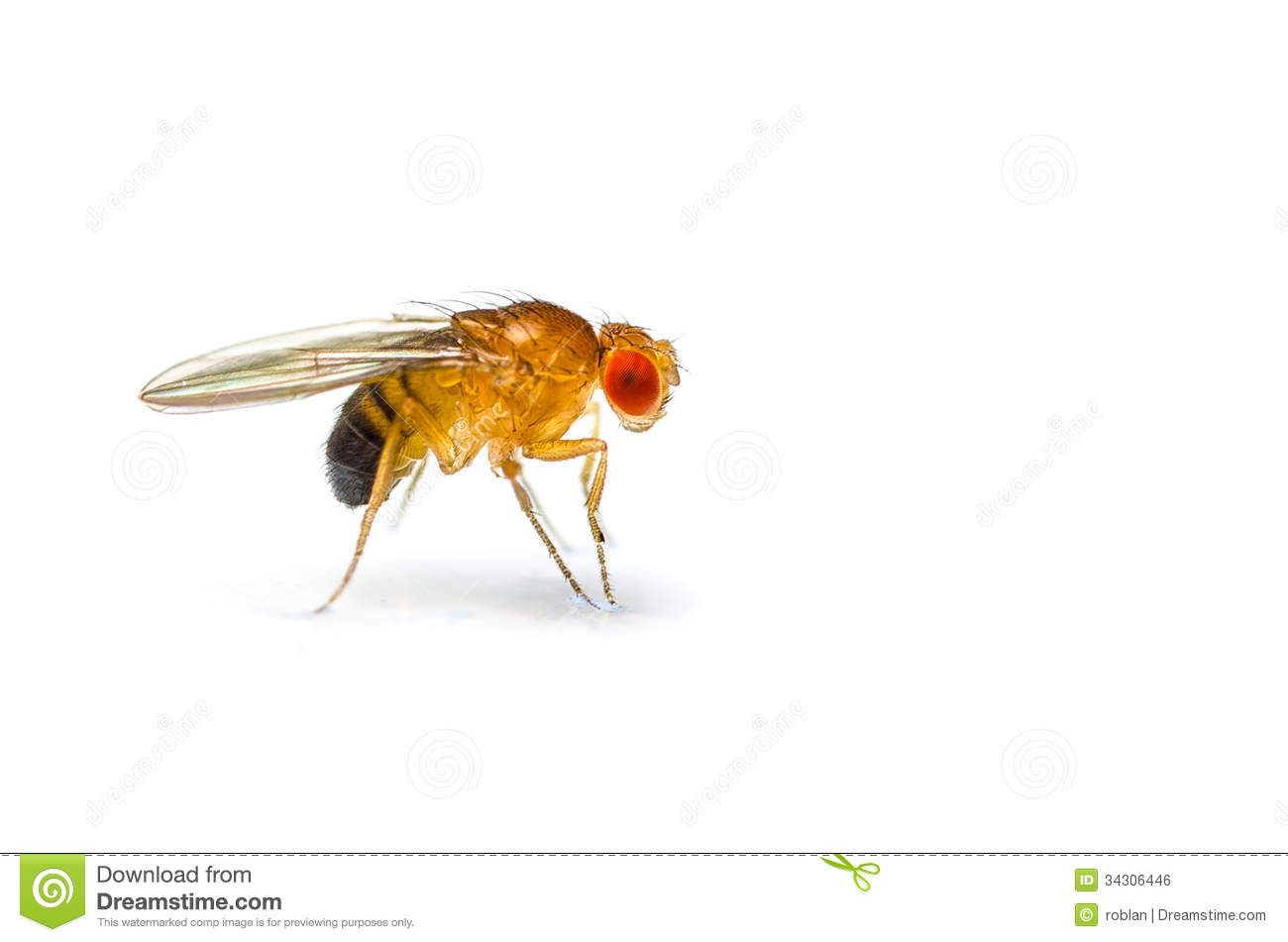 Why Are There Fruit Flies In My Bathroom