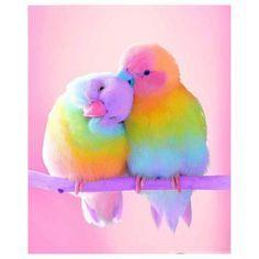 Couple Birds In Colors 5D DIY Diamond Painting Kit