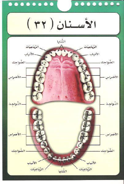 كتاب مخارج الحروف العربية للدكتور أيمن سويد pdf