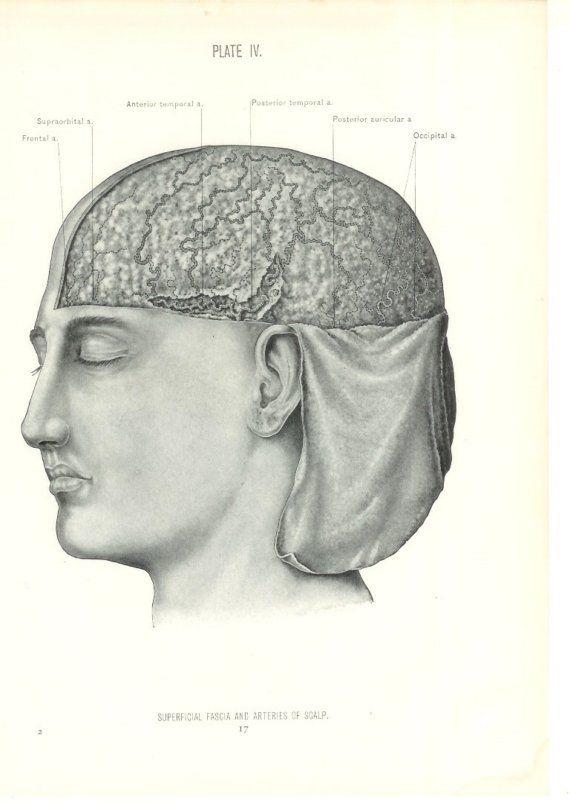 1926 Human Anatomy Print Arteries Of Scalp Vintage Antique