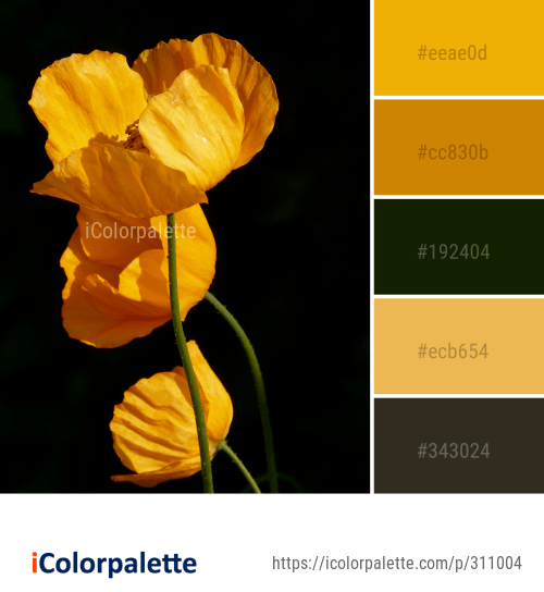 Color Palette Ideas From Flower Wildflower Yellow Image Kleuren