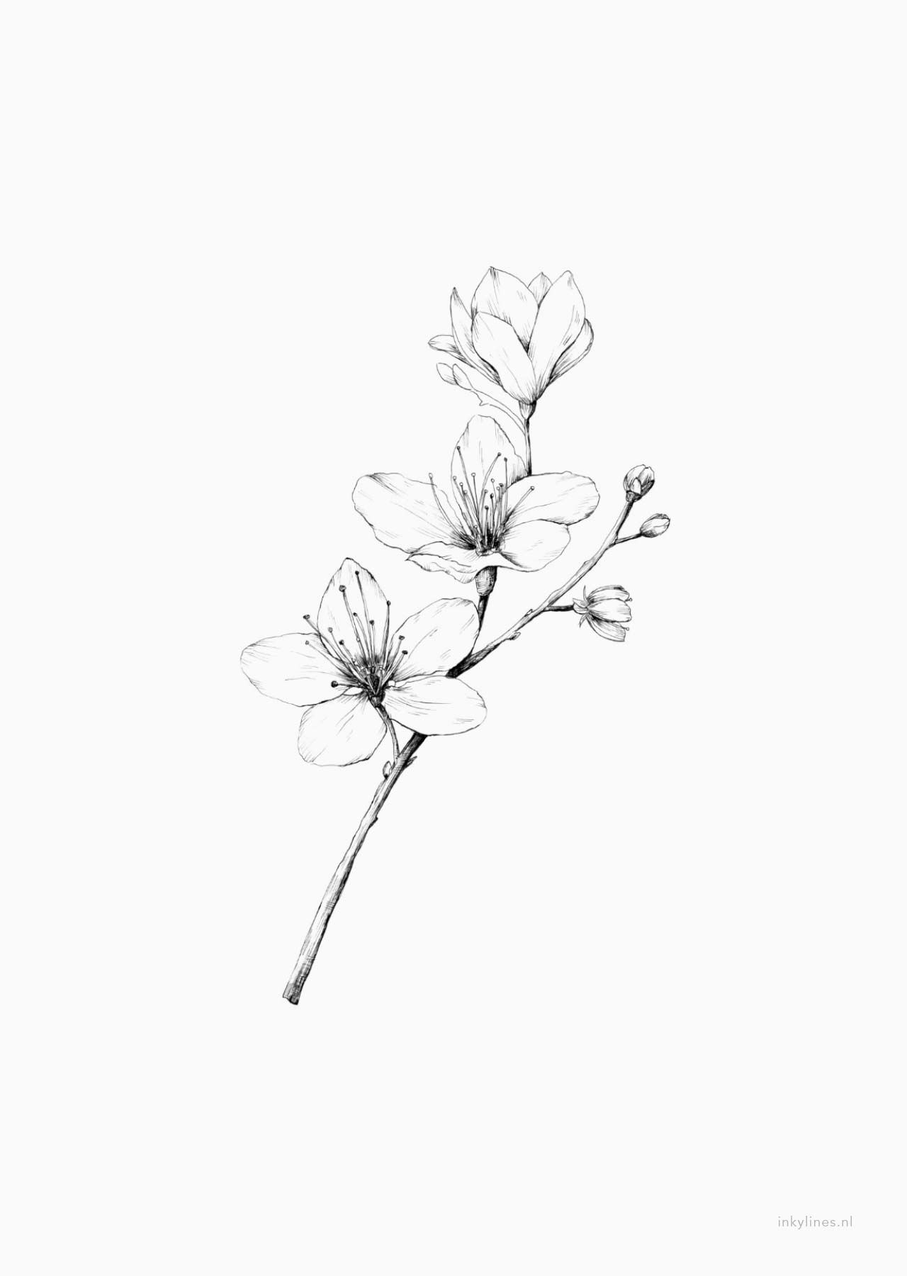 Inkylines Flowers Cherry Blossom In 2020 Cherry Blossom Drawing Simple Flower Tattoo Blossom Tattoo