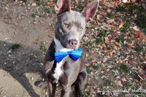 Pet Finder Dog Finder Child Friendly Dogs Dog List Dog Finder
