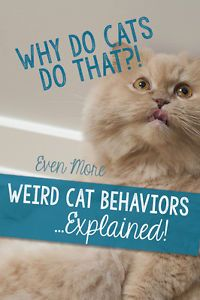 7 Tips to Litter Train a Cat & 7 Tips to Litter Train a Cat | Outdoor cats Litter box and Cat ... Aboutintivar.Com