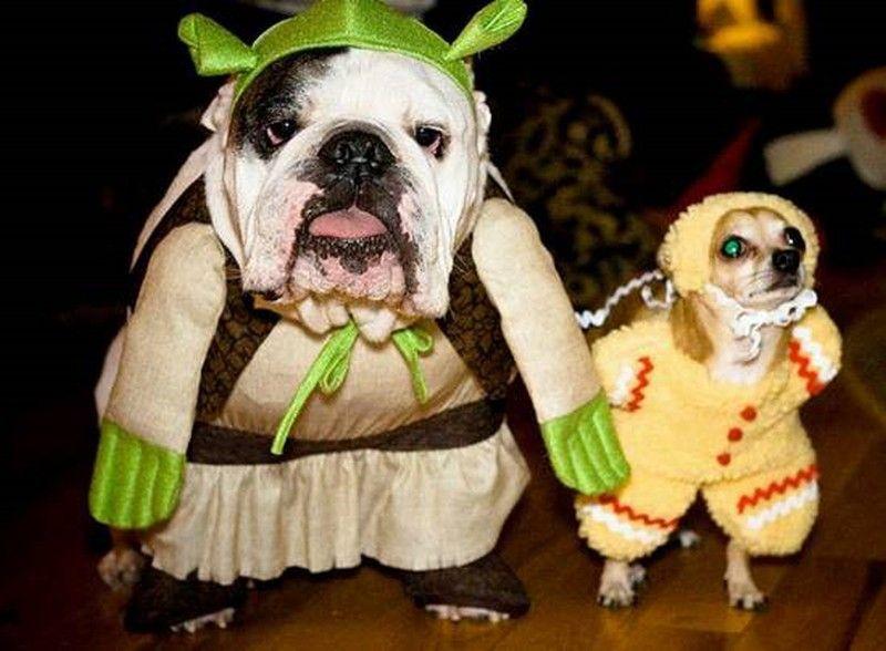Funny Englishbulldog Costume Bulldog Funny Animal Memes Pet