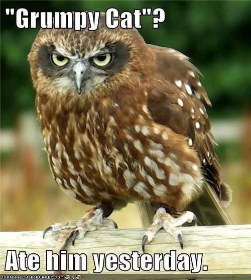 Grumpy cat you say ??