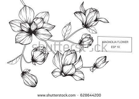 Image result for flower drawing   Bujo   Pinterest ...