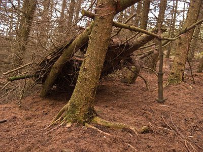 A poorly built shelter left standing in the woods. The type of eyesore that gives