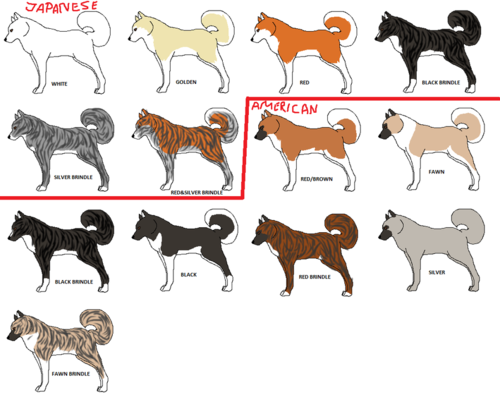 Akita colors love the distinction between american and japanese akitas also rh pinterest