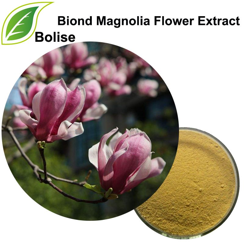 Biond Magnolia Flower Is The Dried Flower Bud Of Magnolia Biondii Panp Magnolia Denudata Desr Or Magnolia Spren Magnolia Flower Flower Extract Dried Flowers